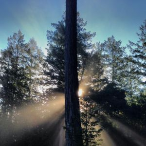 Light Through Trees by Tim Carl